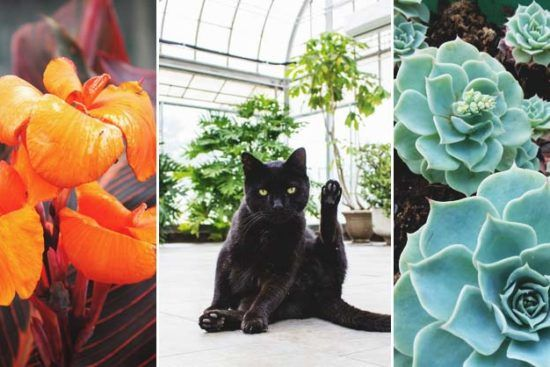 23 Low Light Houseplants That Are Easy To Maintain And Nearly Impossible To Kill Cat Safe Plants Cat Friendly Plants Indoor Shade Plants