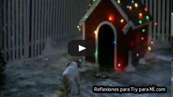 Reflexiones para TI y para MÍ: * NAVIDAD PERRITO ... (bello video para los amantes de los perritos)