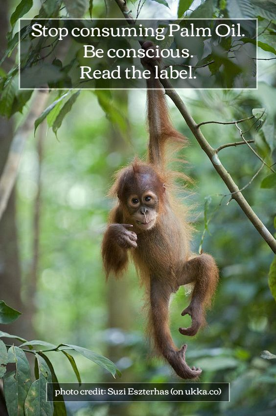 Orangutan. Palm Oil. Stop.: