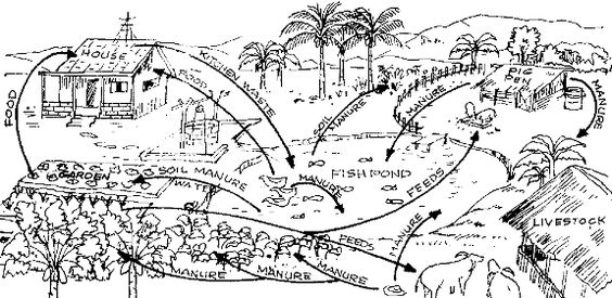u0026quot pond permaculture system u0026quot  i like the flow chart and how