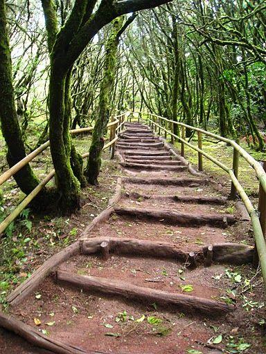 Parque Nacional de Garajonay. La Gomera, Canary Islands.  book online at www.gomeraferienhaus.de