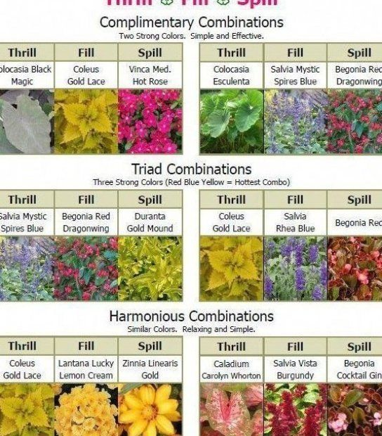Nunc Continentis Gardening Nunc Continentis Gardening Gartenarbeit Im Terrass Nunc Continentis Gardening Nunc In 2020 Container Gardening Container Plants Plants