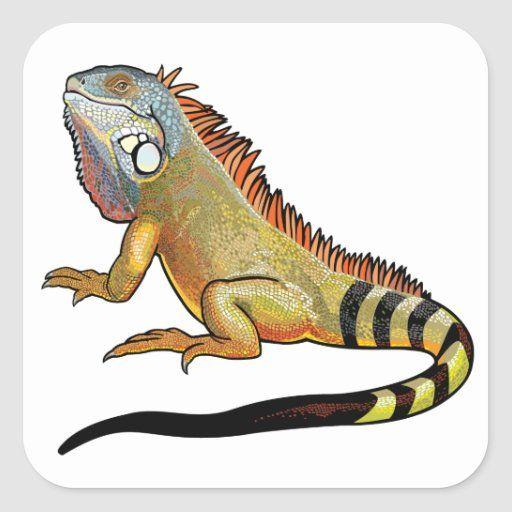 Green Iguana Square Sticker Zazzle Com Green Iguana Iguana Lizard