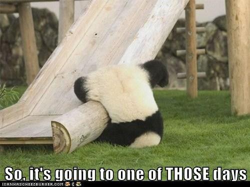 For my Panda Lover.