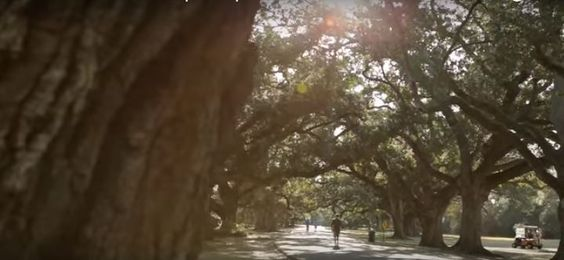 One of New Orleans' great green spaces is Audubon Park, located Uptown right off the St. Charles Avenue streetcar line.