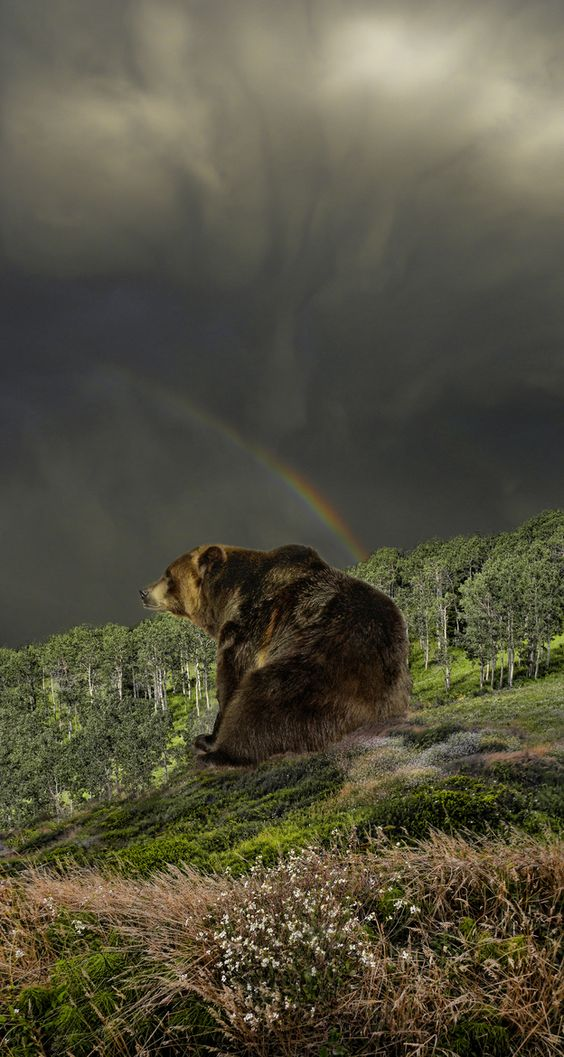 "Bear on a hill, rainbow above, ""she always nursed a small mad hope"" -Vladimir Nabokov, 'Pale Fire'"