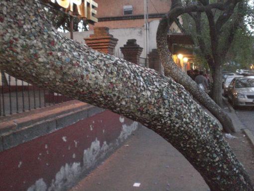 """""""El árbol del chicle"""" Coyoacán, México"""