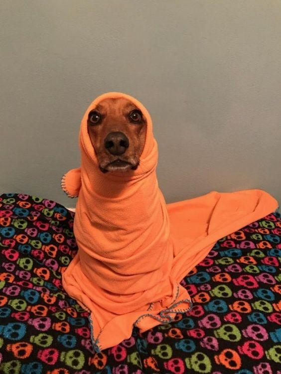 26 απίστευτα αστείες φωτογραφίες που πρέπει να δεις