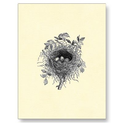 vintage_bird_nest_illustration_postcard-p239633182030665626baanr_400