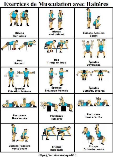 Musculation Avec Halteres Et Poids Libres 15 Exercices 1 Programme Musculation Avec Halteres Programme Musculation Homme Exercice Musculation Haltere