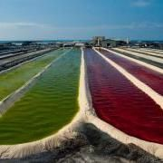 Natural astaxanthin farm (So Dr Mercola's brand is the highest kg of natural astaxanthin as it is living green microalgae (Haematococcus Pluvialis) which has 10,000 to 30,000 kg compared to krill oil which is only 737 kg