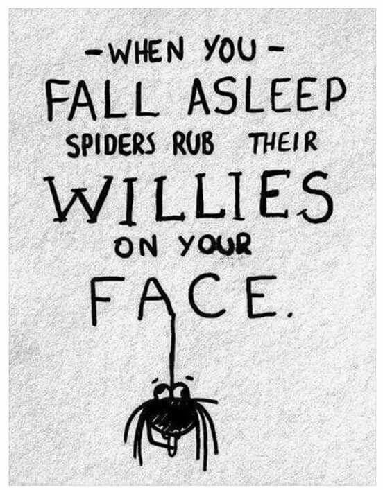 Bad bad spiders!!!