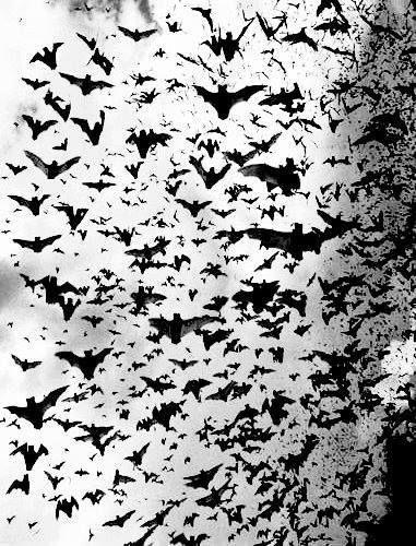 Halloween-BATS, Bats and more bats
