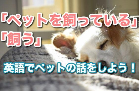 あなたは何かペットを飼っていますか 日本でも犬や猫などのペットを飼う人は増えてきましたが 海外でもペット を飼っているおうちはとても多いです 特に アメリカではペット 犬 猫 Okのアパートがほとんどで 小さいころからペットと暮らしている ペット