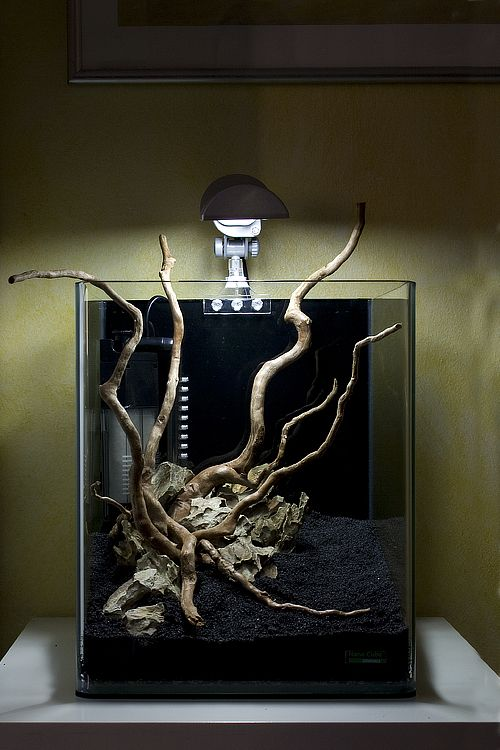 Beautiful Driftwood Aquarium Centerpiece. http://www.driftwoodboss.com