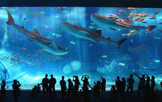 Okinawa Churaumi Aquarium, #Japan | Photography by ©Jon Rawlinson via Twitter @AlistairReign & AlistairReignBlog.com