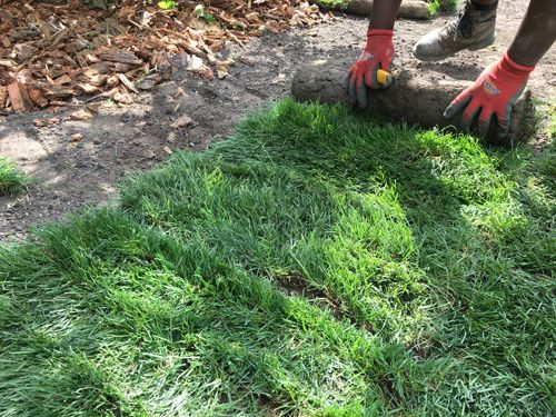 Bc Instant Lawns And Landscapes New Lawn Installation Farm Fresh Sod Roll Turf Grass Supplier Vancouver B Lawn And Landscape Turf Grass Turf Installation