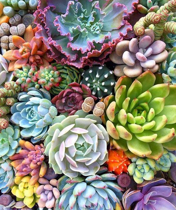 Succulent beauties 🌸🍃 via @fairyblooms #spiritsoflife ✨