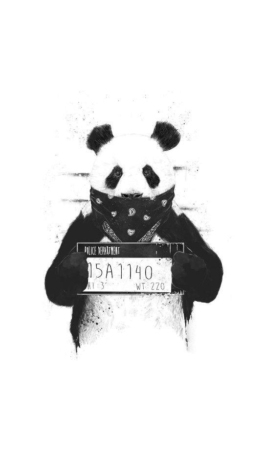パンダのモノクロ・白黒写真の壁紙