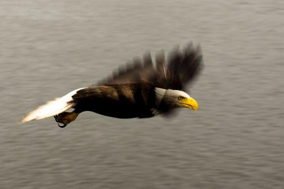 Birds - photo by Scott Duffus