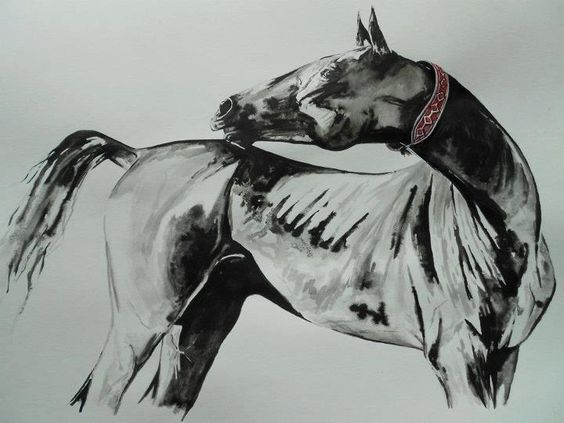 Gorgeous Akhal Teke sketch