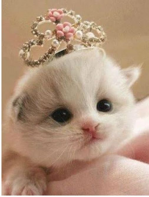 Beautiful little Princess ❤ Nature & Animal Lovers – Community – Google+