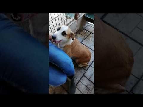 Hiltja Sucht Ein Zuhause In Osterreich Youtube Ausgestopftes Tier Hunde Verstehen Hunde
