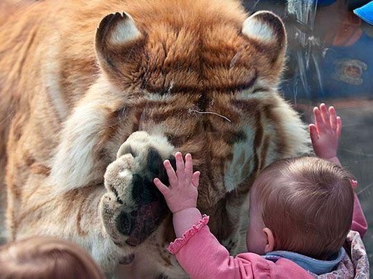 Gentle giant.