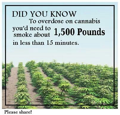 It includes cool stats on the health benefits of medical marijuana, what the annual consumption of marijuana is, how many people actually use marijuana, & more! Description from pinterest.com. I searched for this on bing.com/images
