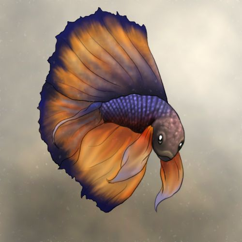 Betta fish by on deviantart for Betta fish personality