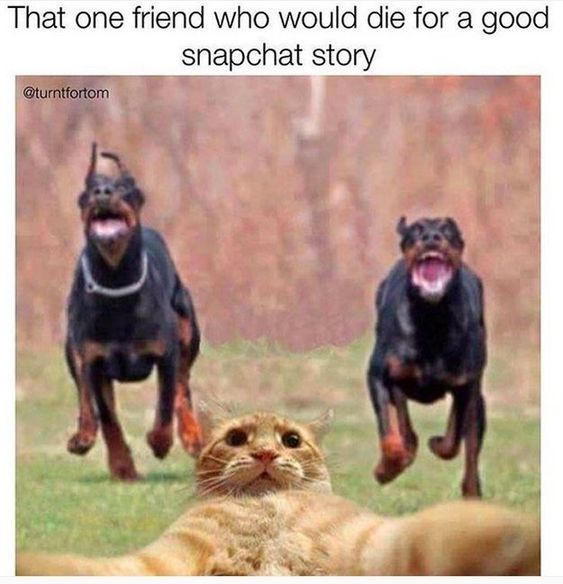 The year of the perfect snap: | 28 Memes That Pretty Much Sum Up Life In 2015: