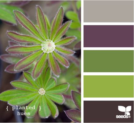 .. planted hues by DesignSeed