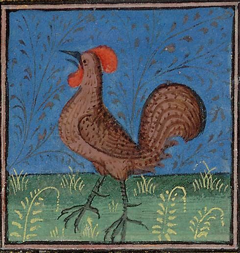 A crowing cock   Huntington Library, HM 27523, Folio 134r: