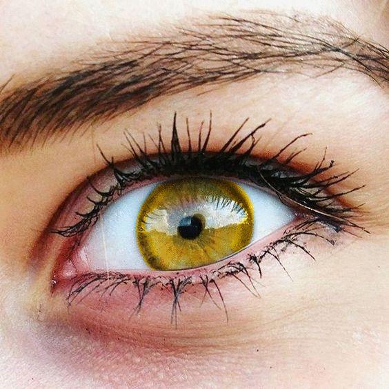 Gold Yellow Eyes Rare Eyes Gold Eyes Cool Eyes