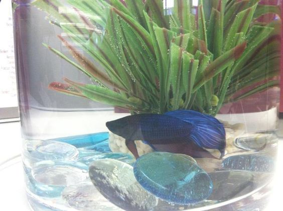 Fernando - The Edelman Digital, Chicago, office fish. Who else has an office fish?