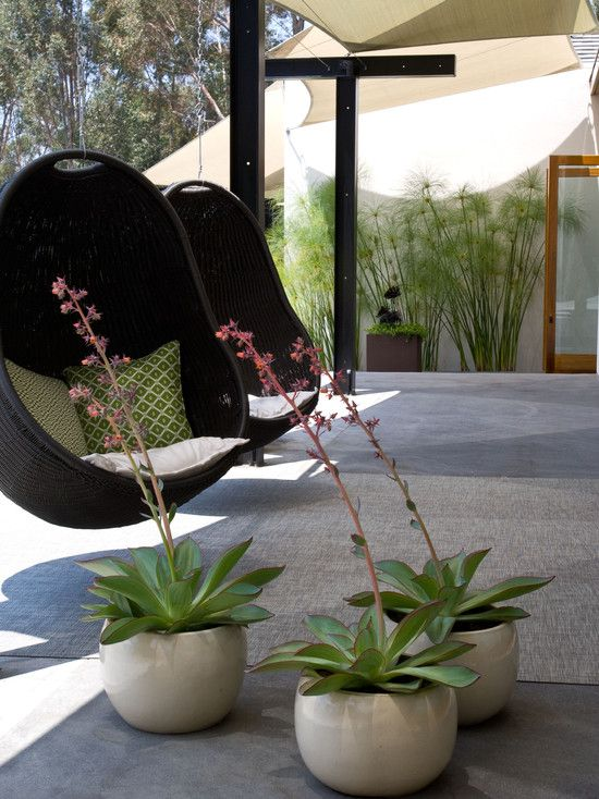 Patio Outdoor Plants In Pots Design, Pictures, Remodel, Decor and ...
