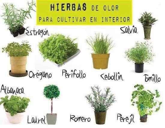 Hierbas arom ticas para sembrar en el interior hierbas - Plantas aromaticas exterior ...