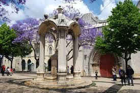 Largo do Carmo e jacarandás de lisboa