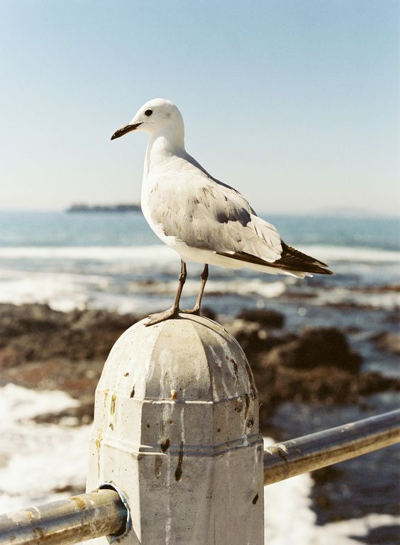 Seagull at Cape Town Beach | photography by http://www.jenhuangblog.com/
