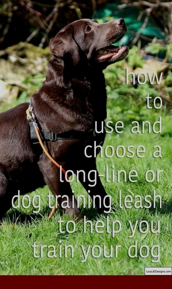 Dog Training Dumbbell Dog Training Urdu Dog Training Revolution