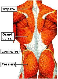 Étirements des muscles dorsaux