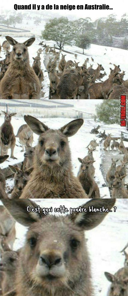 Quand il y a de la neige en Australie... - Be-troll - vidéos humour, actualité insolite