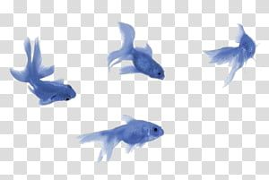 Aesthetic Grunge Four Blue Fishes Illustration Transparent Background Png Clipart Overlays Transparent Overlays Transparent Background Overlays Picsart