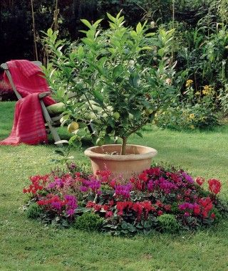 Create a focal point in the garden by placing a taller pot with a citrus tree or other plants in the middle of a group of plants.