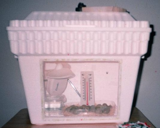 A quick cheap DIY incubator, I might be able to do this myself and forget asking the hubby!!
