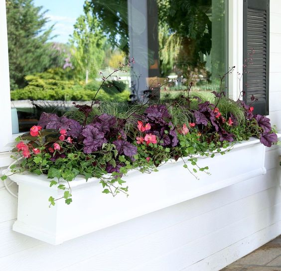 Here are a few pictures from our most recent video where I planted up a couple of window boxes in the shade! I love shade planters because…