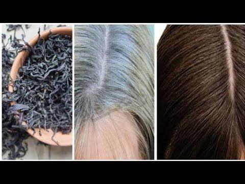 علاج شيب الشعر نهائيا وللأبد من غير صبغة القضاء على الشيب المبكر التخلص من الشعر الابيض نهائيا Youtube Hair Styles Hair Beauty Hair Updos