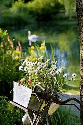 riding my bike, gathering wildflowers from a meadow, then resting next to a pond while a swan glides peacefully along. <3