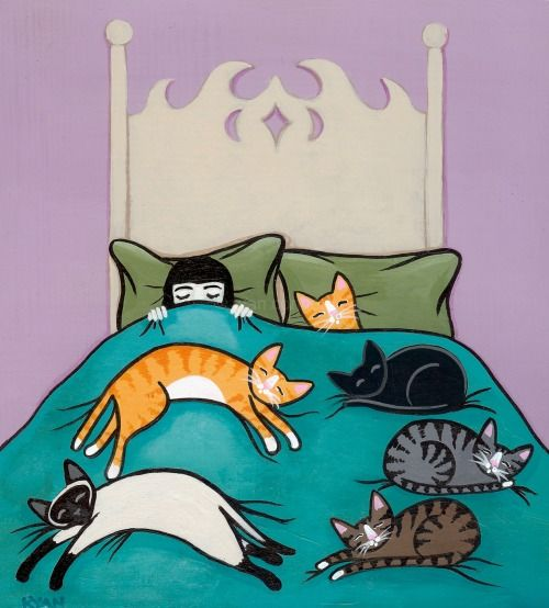 Bedtime with my cats: