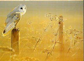 Pollyanna Pickering - Wildlife Art gallery- bright golden haze